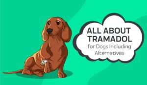 buy-tramadol-100mg-for-dogs