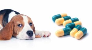 Tramadol-for-Dogs